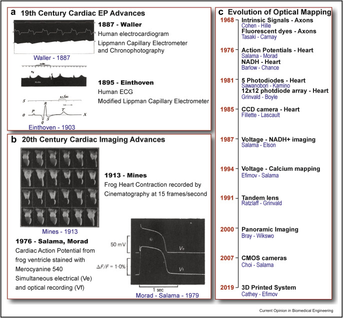 Optocardiography: A review of its past, present, and future