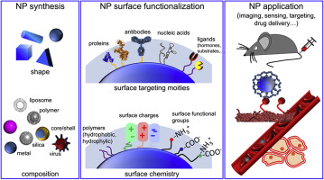 Towards a molecular-level understanding of the protein