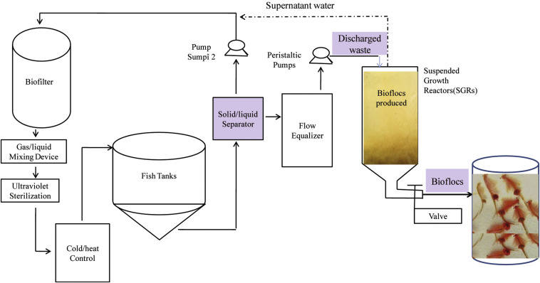 Performance of feeding Artemia with bioflocs derived from