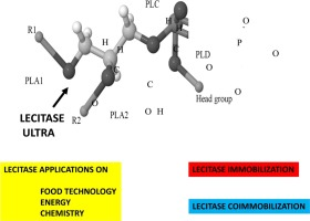 Lecitase ultra: A phospholipase with great potential in biocatalysis