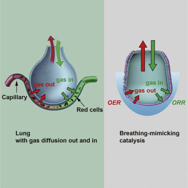 Breathing-Mimicking Electrocatalysis for Oxygen Evolution