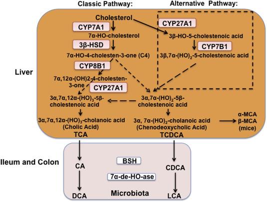 diabetes cyp8b1