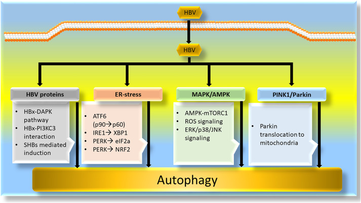 Subversion of cellular autophagy during virus infection