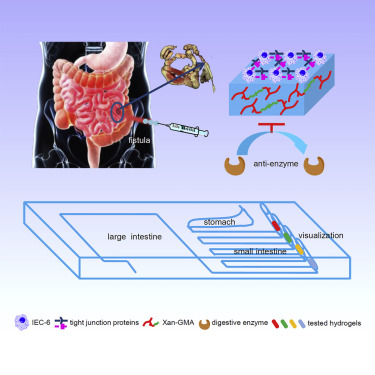 Bioinspired Anti-digestive Hydrogels Selected by a Simulated