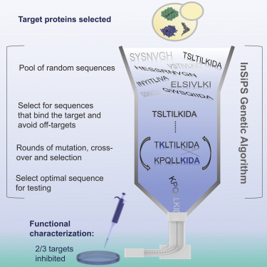 Calcium Binding Proteins (Wiley Series in Protein and Peptide Science)