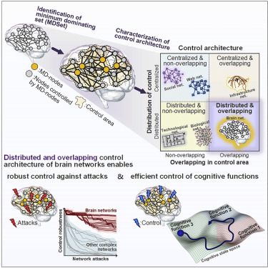 Research Identifies Complex Of Neurons Crucial To Controlling Attention >> The Hidden Control Architecture Of Complex Brain Networks