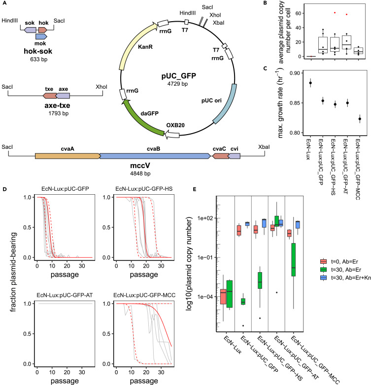 Two New Plasmid Post-segregational Killing Mechanisms for the