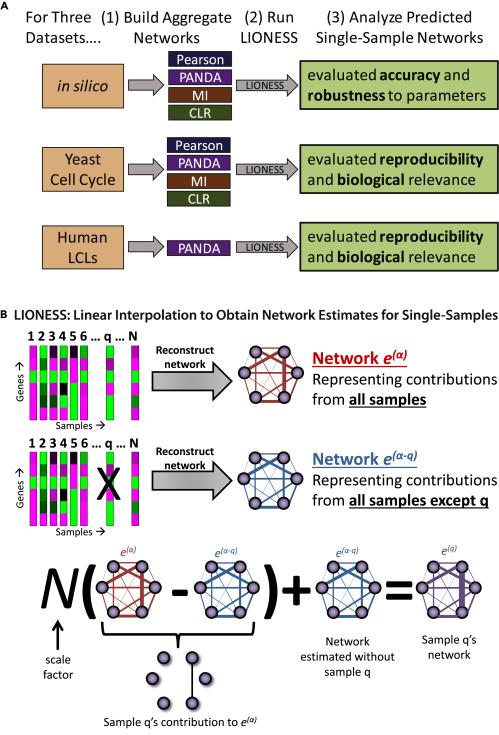 Estimating Sample-Specific Regulatory Networks - ScienceDirect