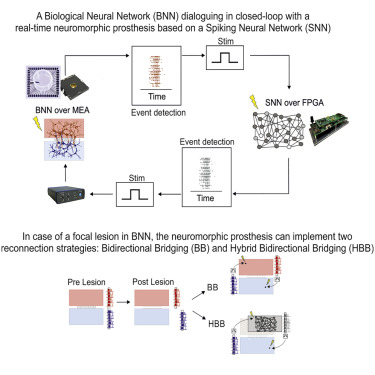 A Neuromorphic Prosthesis to Restore Communication in ... on