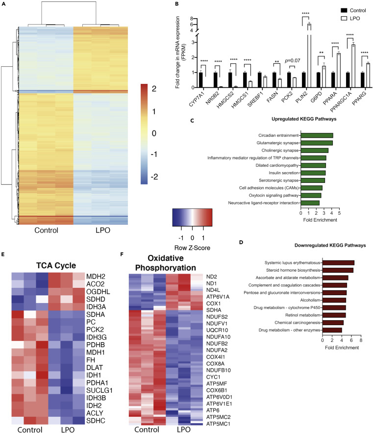 A Human Pluripotent Stem Cell Model For The Analysis Of Metabolic Dysfunction In Hepatic Steatosis Sciencedirect
