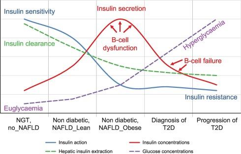 diabetes mellitus tipo 1 y 25