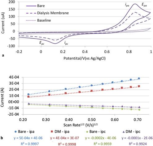An electrochemical study of acrylate bone adhesive permeability and