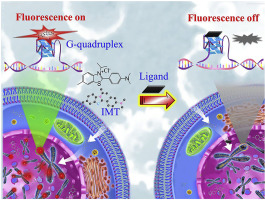 Evaluation of the selectivity of G-quadruplex ligands in