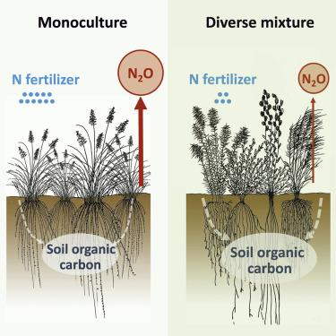 Climate Benefits Of Increasing Plant Diversity In Perennial Bioenergy Crops Sciencedirect