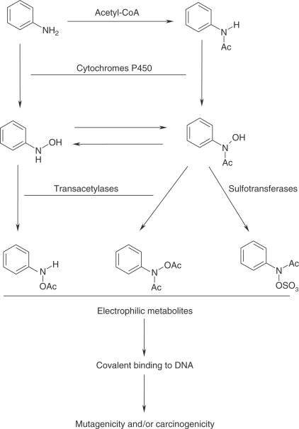 Aromatic Amide - an overview | ScienceDirect Topics