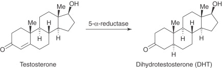Dihydrotestosterone - an overview | ScienceDirect Topics