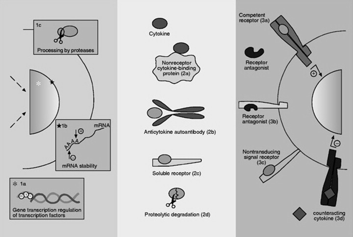 Key Molecule May Tie Immune Response To >> Cytokines An Overview Sciencedirect Topics