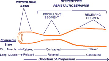 Peristalsis An Overview Sciencedirect Topics