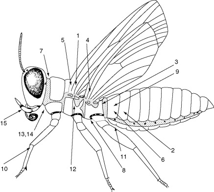 284 Best Insects Study images in 2020 | Insects, Insects theme ... | 391x437