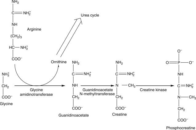 Hippuric Acid - an overview | ScienceDirect Topics