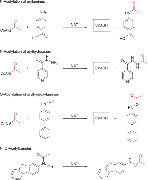 Aromatic Amine - an overview | ScienceDirect Topics