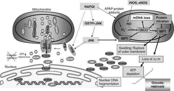 NAPQI - an overview | ScienceDirect Topics