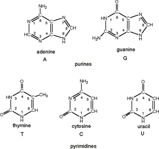nitrogenous base an overview sciencedirect topics