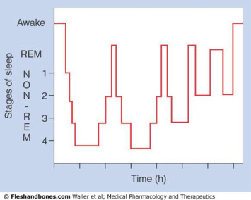 Alpha Wave - an overview | ScienceDirect Topics