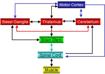 Somatic Nervous System - an overview | ScienceDirect Topics