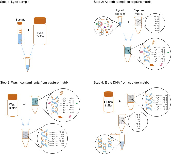 Pre-Analytical Phase - an overview | ScienceDirect Topics