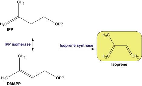 Isoprene - an overview | ScienceDirect Topics