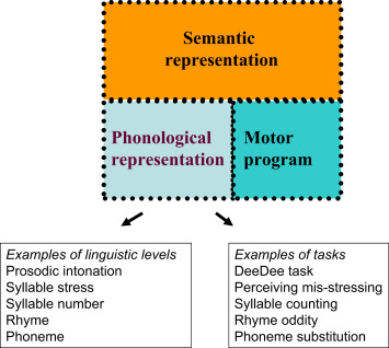 Lexical Representation - an overview | ScienceDirect Topics