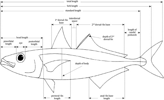 Advances In Authenticity Testing For Fish Speciation Sciencedirect