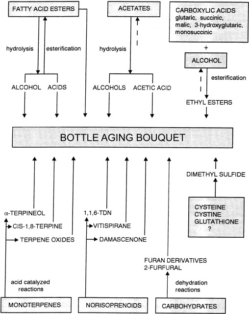 Shelf Life of Wine - ScienceDirect