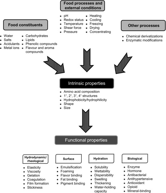 Properties Of Proteins In Food Systems An Introduction Sciencedirect