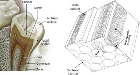 Dental Restorative Materials - an overview | ScienceDirect