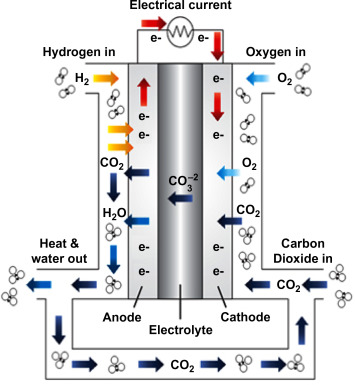 Fuel Cell Reaction - an overview | ScienceDirect Topics