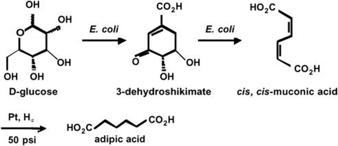 Adipic Acid - an overview | ScienceDirect Topics
