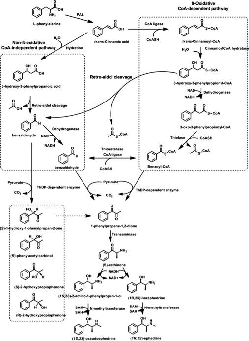 Amphetamine - an overview   ScienceDirect Topics