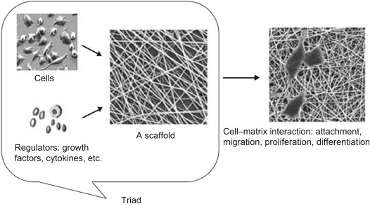 Textile-based scaffolds for tissue engineering - ScienceDirect