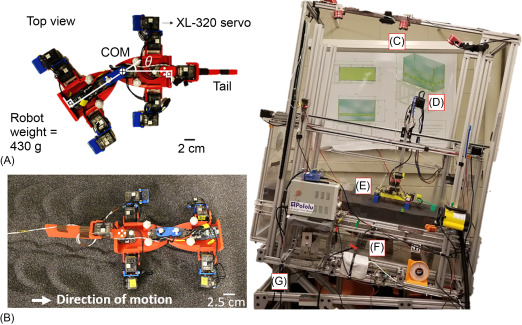 Physics approaches to natural locomotion: Every robot is an