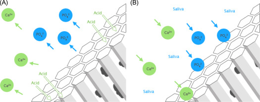 Calcium orthophosphates as a dental regenerative material