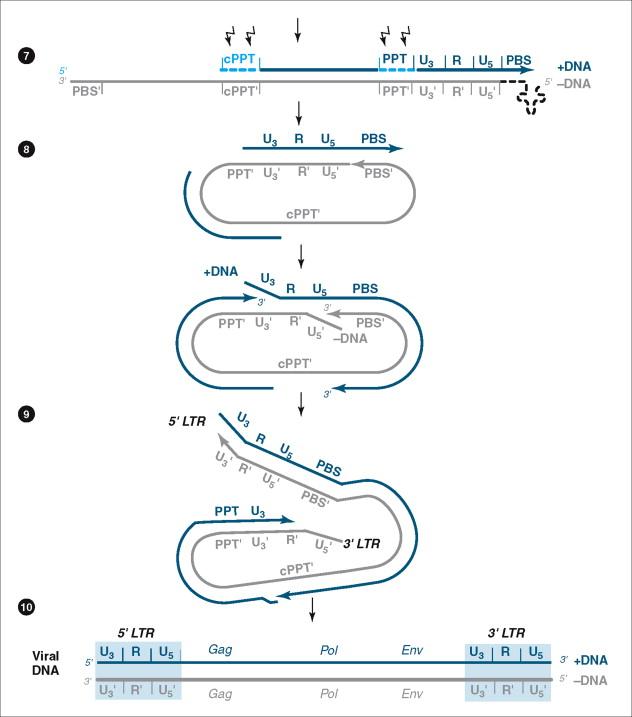 Reverse Transcriptase - an overview   ScienceDirect Topics