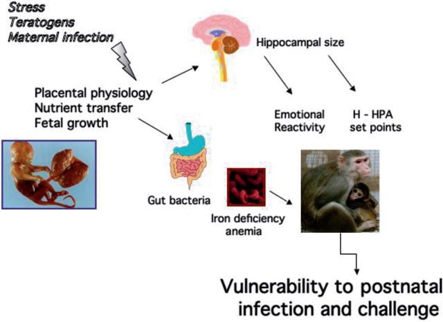 Prenatal Infection May Alter Behavior >> Prenatal Stress An Overview Sciencedirect Topics
