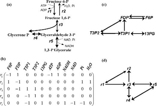stoichiometric matrix - an overview   ScienceDirect Topics