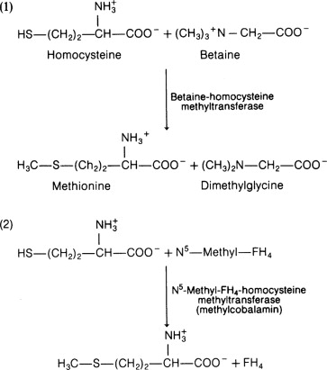 methionine an overview sciencedirect topics