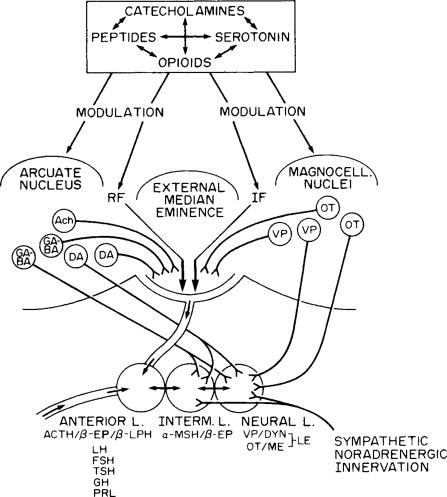 Endogenous Opioids And Behavior