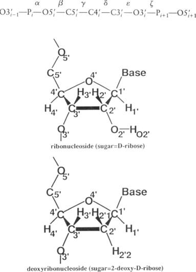 diagram of ribose deoxy 2 deoxy d ribose an overview sciencedirect topics  2 deoxy d ribose an overview