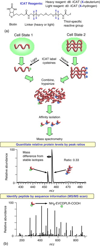 Isotope-Coded Affinity Tag - an overview | ScienceDirect Topics