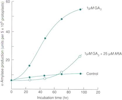 Gibberellic Acid - an overview | ScienceDirect Topics